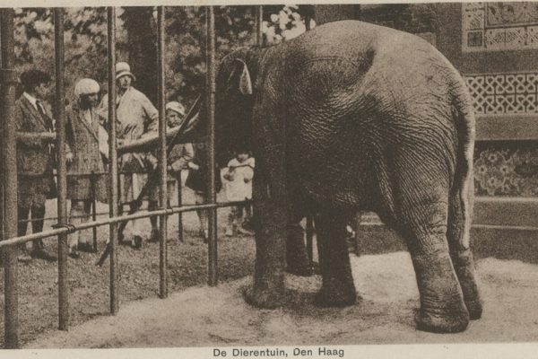olifant_betsy_haagse_dierentuin